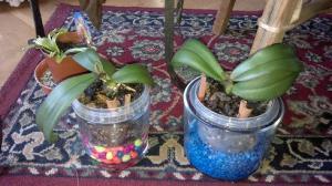 Entre orquideas ii parte casigata en el zaguan - Tiestos para orquideas ...